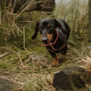 video-production-company-filming-with-animals